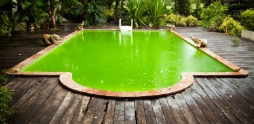 How to Keep Your Swimming Pool Free from Algae