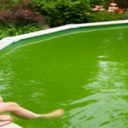 Pool Plan Against Algae