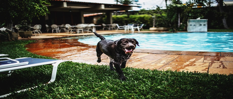 The Pros and Cons of Your Dog In Your Pool